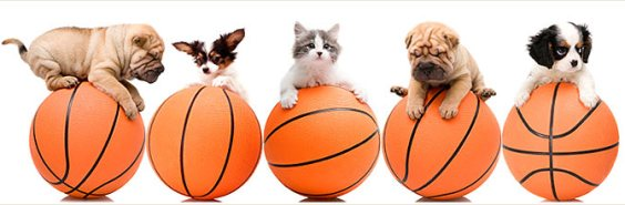 Puppies and Kitten on Basketballs